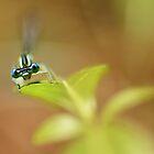 Blue Dragonfly by JBlaminsky