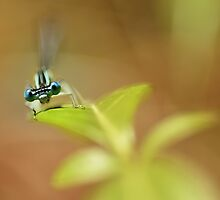Blue Dragonfly by JBlaminsky