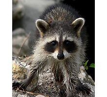 Baby Racoon    190 Views Photographic Print