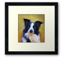 Taj - Border Collie Framed Print