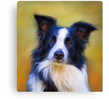 Taj - Border Collie Canvas Print