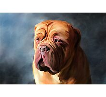 Stormy Dogue Photographic Print