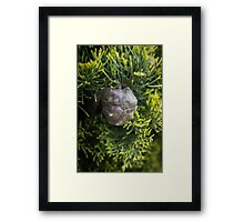 Pencil pine nut Framed Print