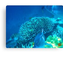 Three Wise Fish   Canvas Print