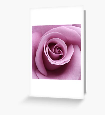 lilac rose Greeting Card