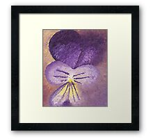 Oil painting of Pansy - Viola Tricolor Framed Print