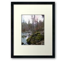 Bear Creek I Framed Print