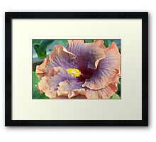 Peach Pleasure Framed Print