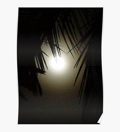 Palm Moon Poster