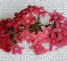 Collaboration ~ Red beauties by Vic Cross