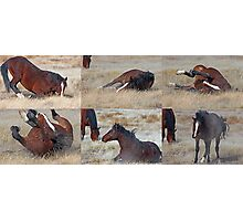 Scratching Back Montage Photographic Print