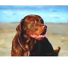 Bosco at the Beach Photographic Print