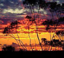 Day Break through the Trees..... by debsphotos