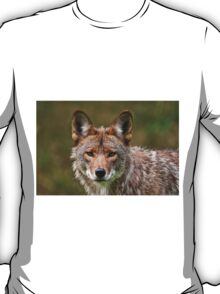 Coyote Portrait  T-Shirt
