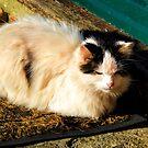 Alley Cat........... by lynn carter