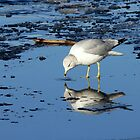 River Gull by LjMaxx