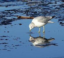 River Gull by LjMaxx