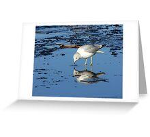 River Gull Greeting Card