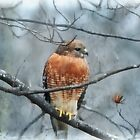 Winter Hawk by Eileen McVey