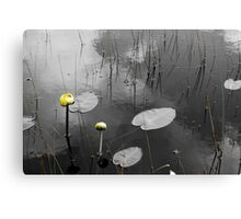 Lily Pads in Pond Canvas Print