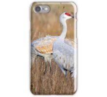 Sand Hill Cranes iPhone Case/Skin