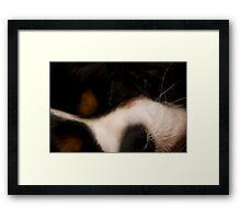 Puppy Dreams Framed Print