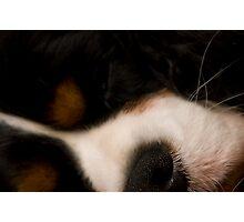 Puppy Dreams Photographic Print