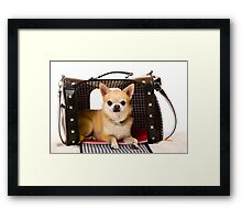 Chihuahua and pet carry case Framed Print