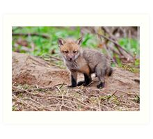 Fox Kit on Den - Ottawa, Ontario Art Print