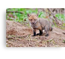 Fox Kit on Den - Ottawa, Ontario Metal Print