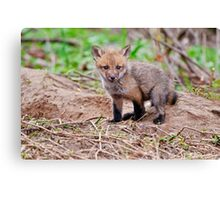 Fox Kit on Den - Ottawa, Ontario Canvas Print