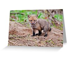 Fox Kit on Den - Ottawa, Ontario Greeting Card