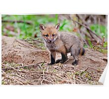 Fox Kit on Den - Ottawa, Ontario Poster