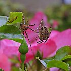 Spider Love by Kat Simmons