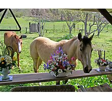 Grass Croppers Photographic Print