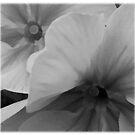 monochrome flower ... by SNAPPYDAVE