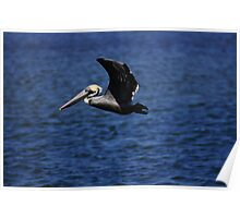 cruzin pelican Poster