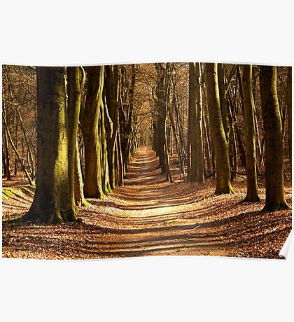 Forest Path in Spring Light Poster