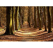 Forest Path in Spring Light Photographic Print
