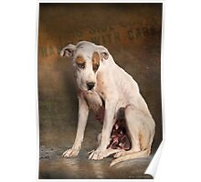 handle with care,  street dog portrait Poster