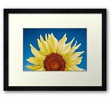 Sunflower close-up - blue background Framed Print