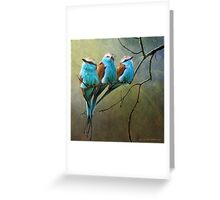 racquet tailed rollers- blue birds of africa Greeting Card