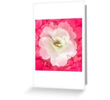 White Rose with Pink Leaves Around Greeting Card