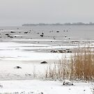 ice covered lake by mrivserg