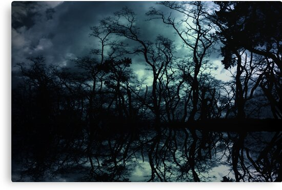 Forbidden Forest by Varinia   - Globalphotos
