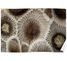 Looking Into a Petoskey Stone Poster
