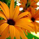 Flowers by DflyBri