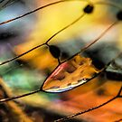 Plain Stain in a Natural Pane by Kenneth Haley