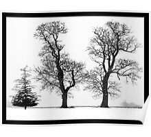Three Trees in the Norfolk snow - black & white Poster