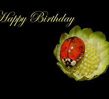 Happy Birthday Ladybug by Bonnie T.  Barry